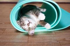 小猫说谎在瑜伽席子的,健身 免版税库存照片