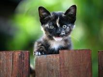 小猫画象 免版税库存照片