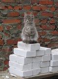 小猫建造者 免版税库存照片