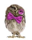 小猫头鹰佩带的放大镜和蝶形领结 库存图片