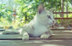 小猫 免版税库存照片