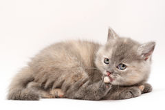 小猫 库存照片