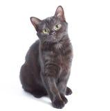 黑小猫 免版税库存照片