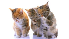 小猫 影视素材