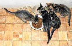 小猫3 免版税库存图片