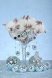 小猫ragdoll休眠 免版税图库摄影