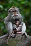 小猴子母亲保护 免版税图库摄影