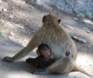 小猴子母亲 库存照片
