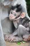 小猴子 图库摄影