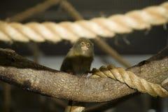 小猿 库存照片