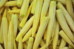 小玉米作为背景 免版税库存照片