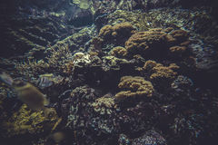 小珊瑚礁生态系 库存照片