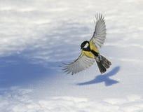 小甜心一只美丽的鸟广泛飞行传播它的翼 图库摄影