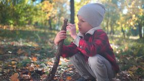 小男孩使用与树枝坐与黄色叶子的地面在秋天公园 股票录像