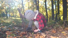 小男孩使用与树枝坐与黄色叶子的地面在秋天公园 影视素材