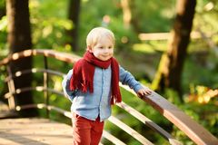 小男孩在晴朗的森林里享受漫步或在夏天公园 图库摄影