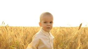 小男孩在领域走在日落 股票录像