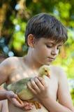 小男孩用幼鹅 免版税图库摄影