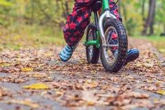 小男孩获得在自行车的乐趣在秋天森林选择聚焦 图库摄影
