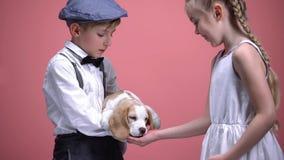 小男孩藏品小狗,从开放棕榈,动物的女孩哺养的狗爱并且关心 库存照片