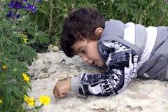 小男孩观看的蚂蚁 免版税库存照片