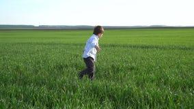 小男孩走和在领域的感人的绿色麦子 孩子手感人的麦子 收获概念 收获概念 影视素材