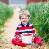 小男孩采摘和吃草莓在莓果种田 免版税图库摄影