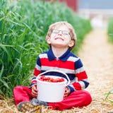 小男孩采摘和吃草莓在莓果种田 免版税库存照片