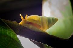 小白色蜗牛 免版税库存图片
