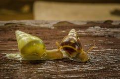小白色蜗牛 库存图片