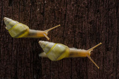 小白色蜗牛 库存照片