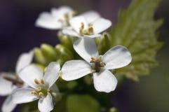 小白花在中心 库存图片