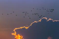 小白鹭在Arugam海湾盐水湖,斯里兰卡 免版税库存照片