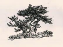 小的三个结构树 库存图片