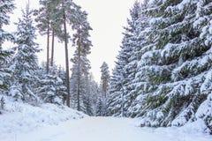 小的乡下公路在冬天-瑞典 库存图片