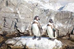 小的企鹅 免版税库存照片