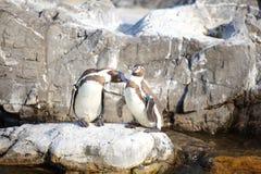 小的企鹅 库存图片