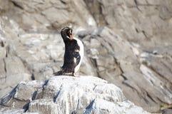 小的企鹅 免版税图库摄影