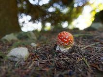 小的伞菌 免版税库存图片