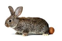 小的兔子和鸡蛋 库存图片