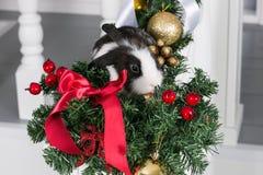 小的兔子坐在圣诞树下 库存图片
