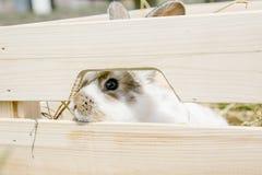 小的兔子,黑白衣服,兔宝宝吃绿色gras 免版税图库摄影