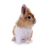 小的兔子 免版税库存照片