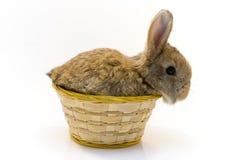 小的兔子 库存照片