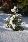 小的冬天结构树 免版税库存照片