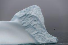 小的冰山 库存图片