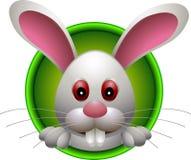 小的可爱的兔子题头 库存图片