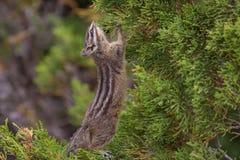 小的啮齿目动物 免版税图库摄影