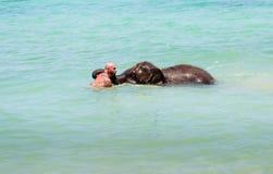 小的大象小牛在有人的海游泳 免版税图库摄影