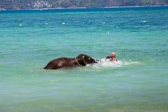小的大象小牛在有人的海游泳 免版税库存照片